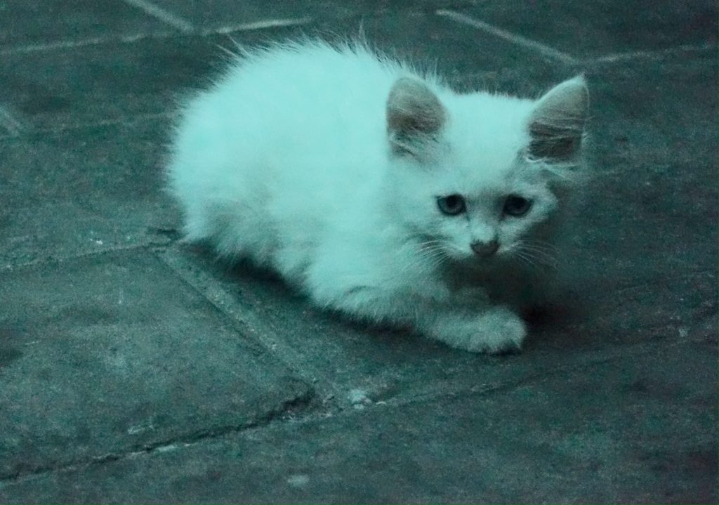 Picture of kitten