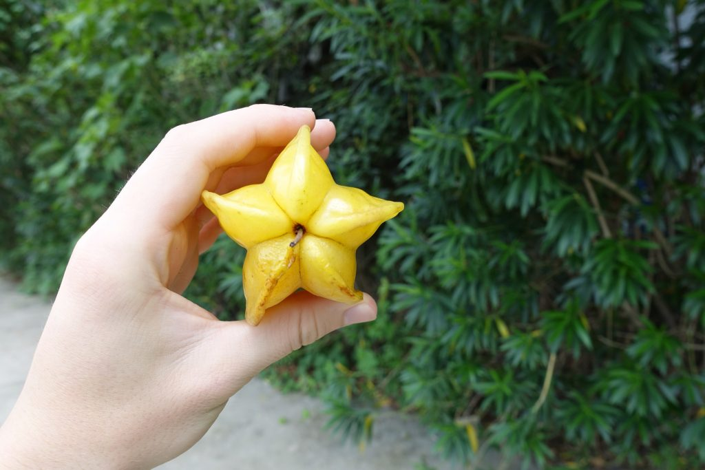 Picture of starfruit