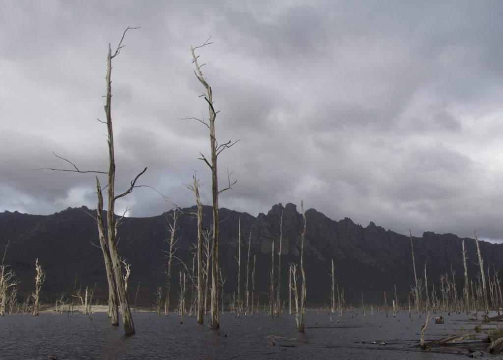 Dead trees in Lake Gordon
